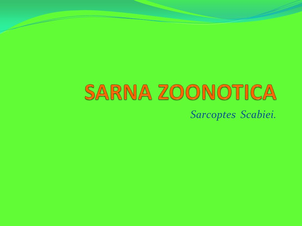 SARNA ZOONOTICA Sarcoptes Scabiei.