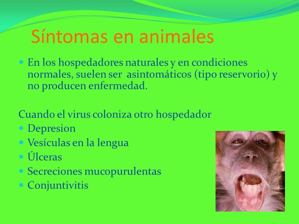 Síntomas en animalesEn los hospedadores naturales y en condiciones normales, suelen ser asintomáticos (tipo reservorio) y no producen enfermedad.