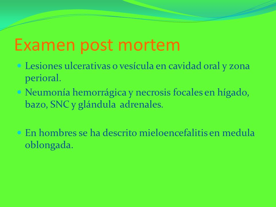 Examen post mortemLesiones ulcerativas o vesícula en cavidad oral y zona perioral.