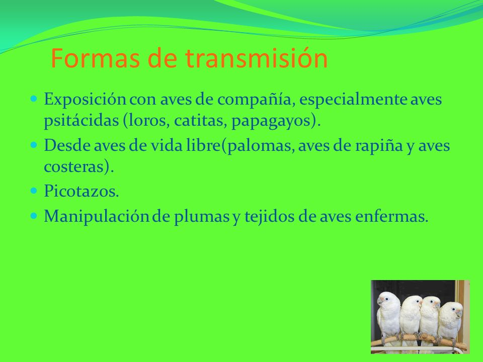 Formas de transmisiónExposición con aves de compañía, especialmente aves psitácidas (loros, catitas, papagayos).