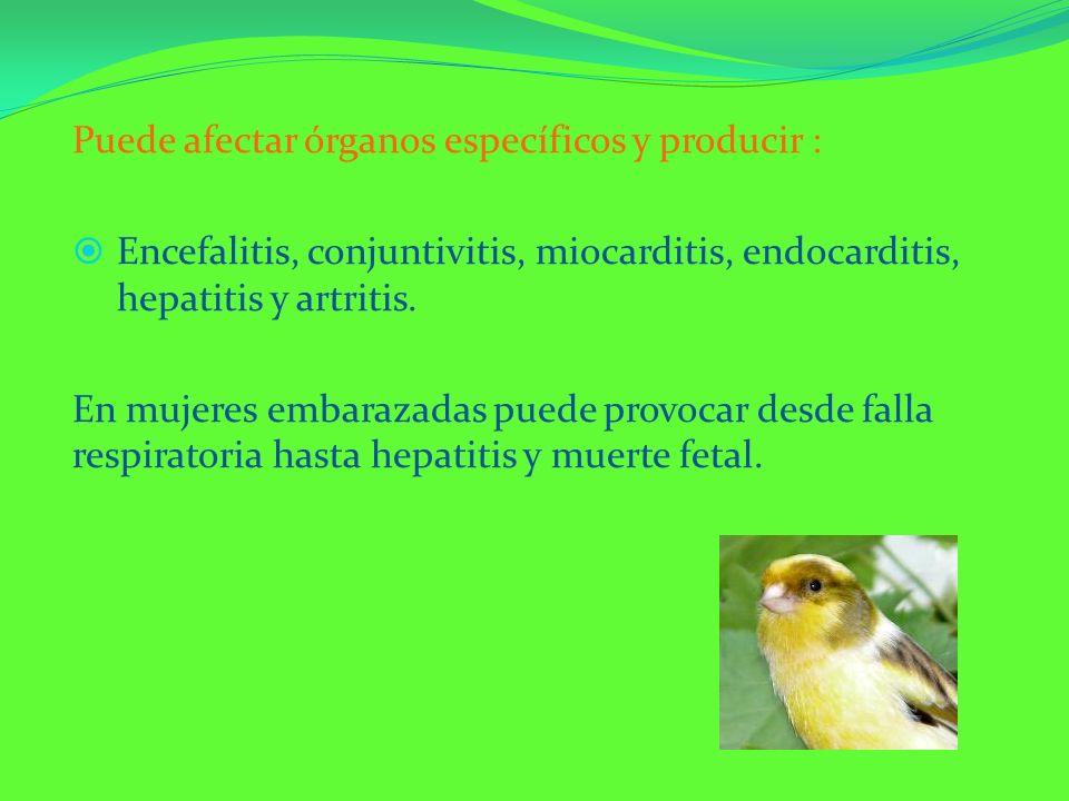 Puede afectar órganos específicos y producir :