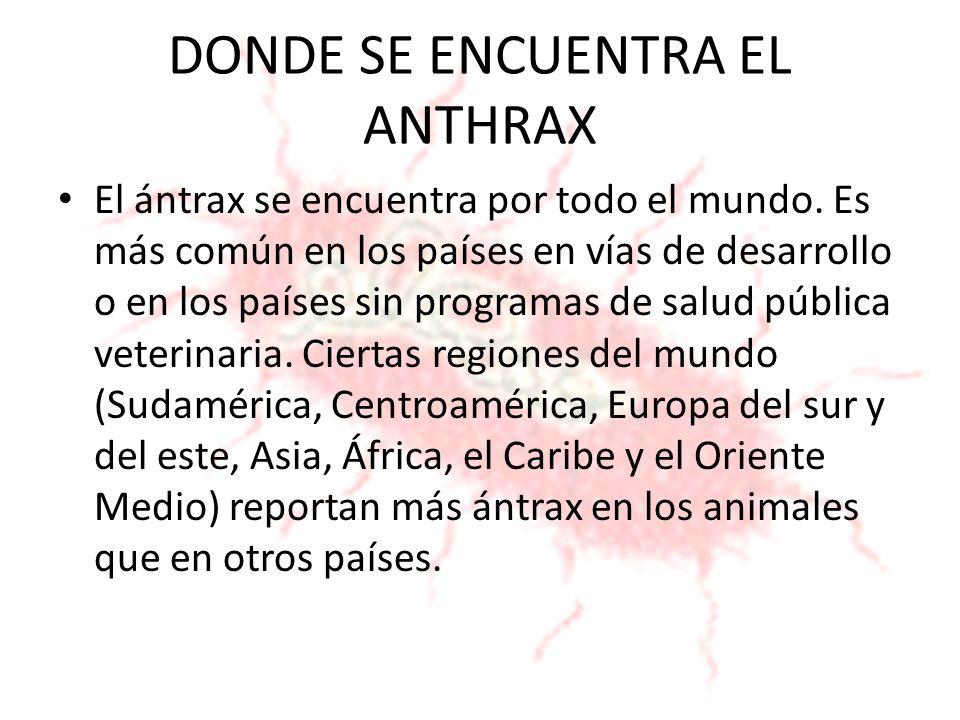DONDE SE ENCUENTRA EL ANTHRAX
