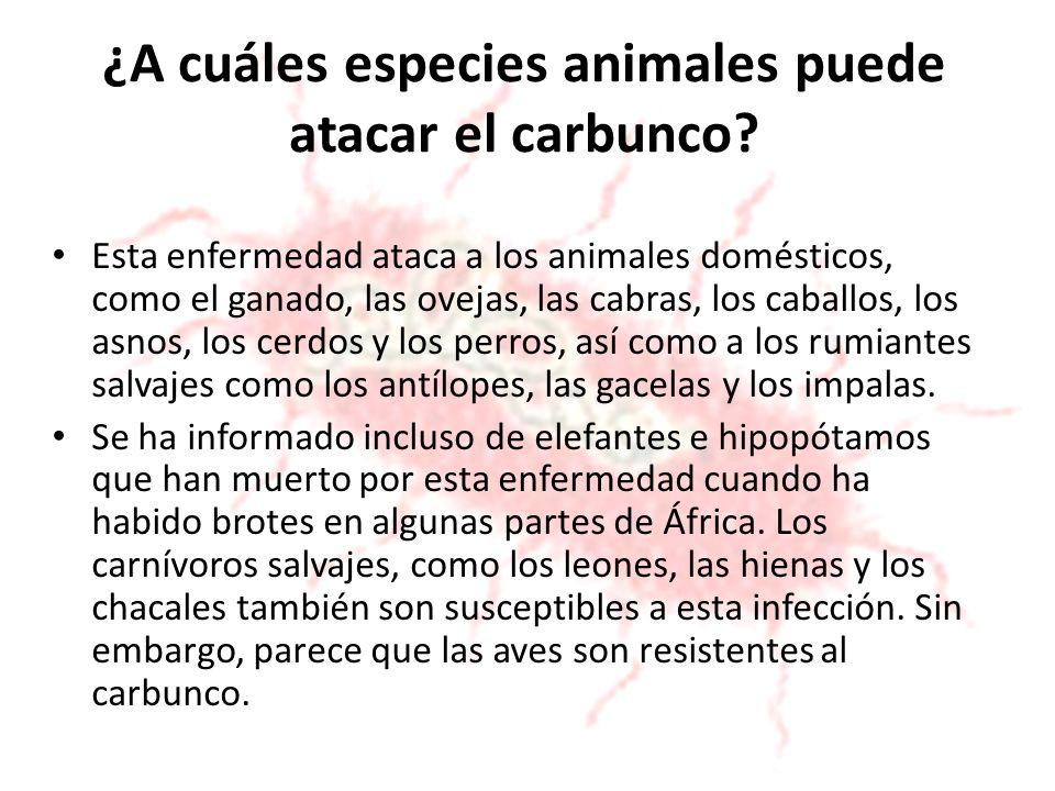 ¿A cuáles especies animales puede atacar el carbunco