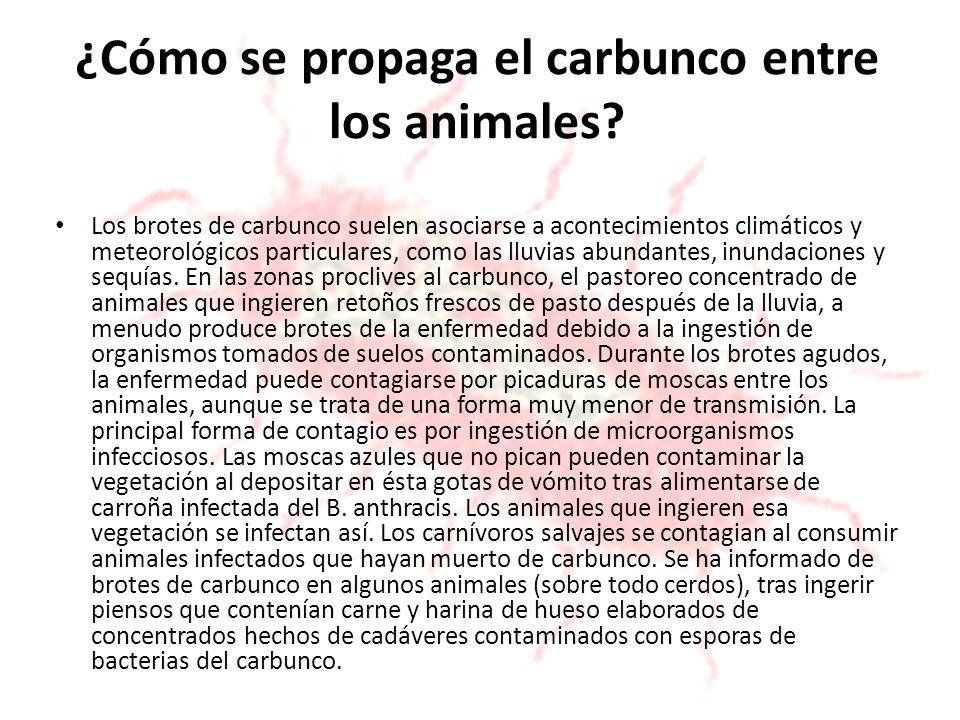 ¿Cómo se propaga el carbunco entre los animales