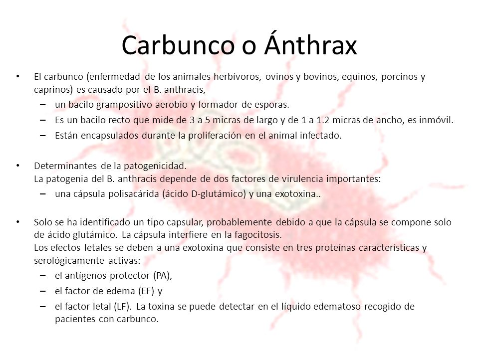Carbunco o Ánthrax