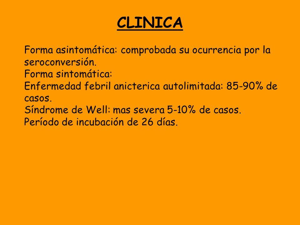 CLINICA Forma asintomática: comprobada su ocurrencia por la seroconversión. Forma sintomática: