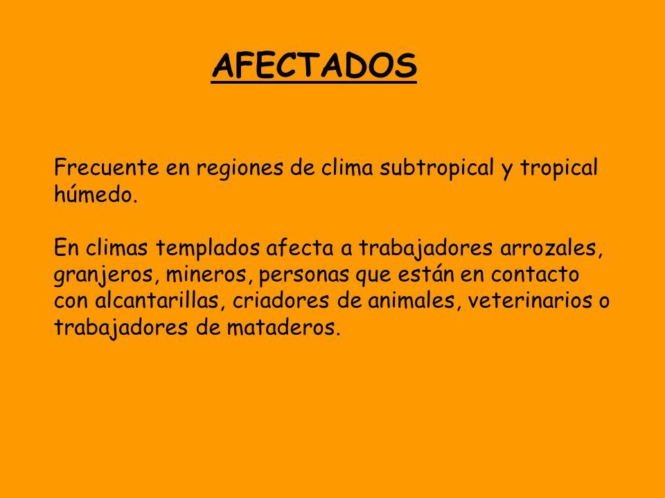 AFECTADOS Frecuente en regiones de clima subtropical y tropical húmedo.