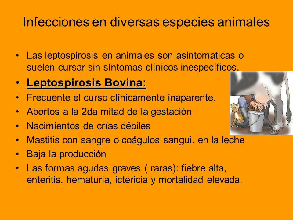 Infecciones en diversas especies animales
