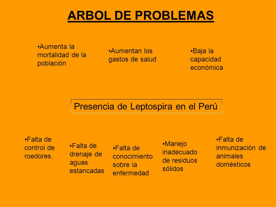 ARBOL DE PROBLEMAS Presencia de Leptospira en el Perú