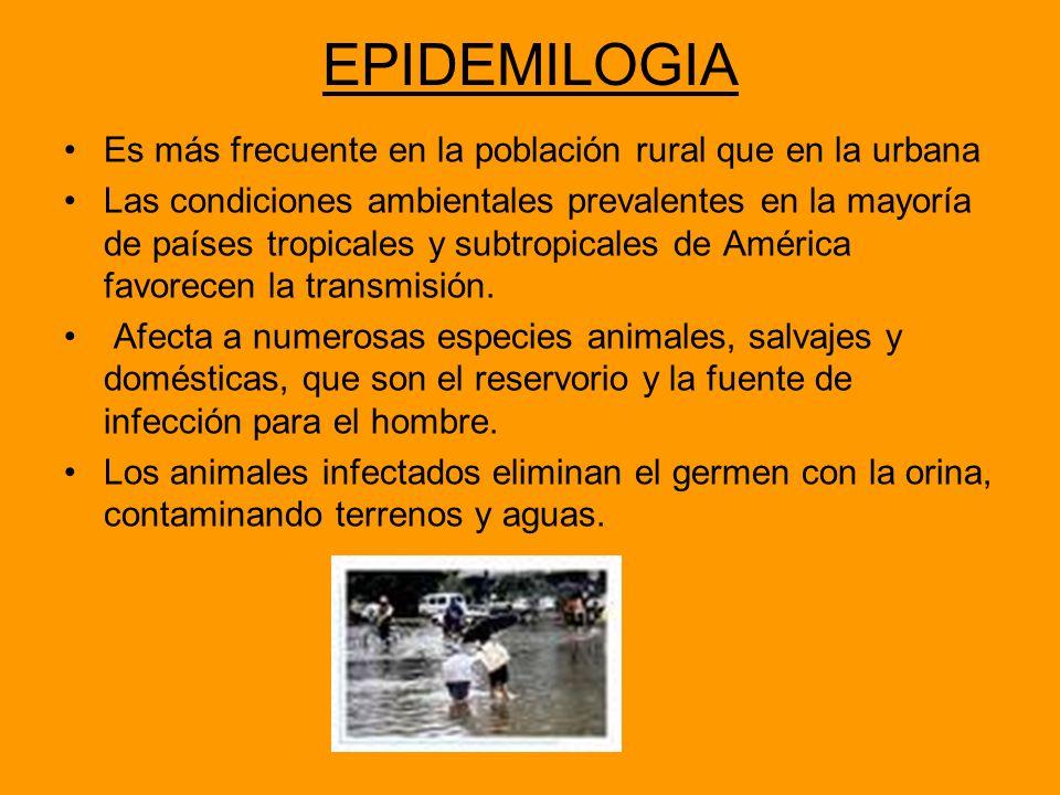 EPIDEMILOGIA Es más frecuente en la población rural que en la urbana