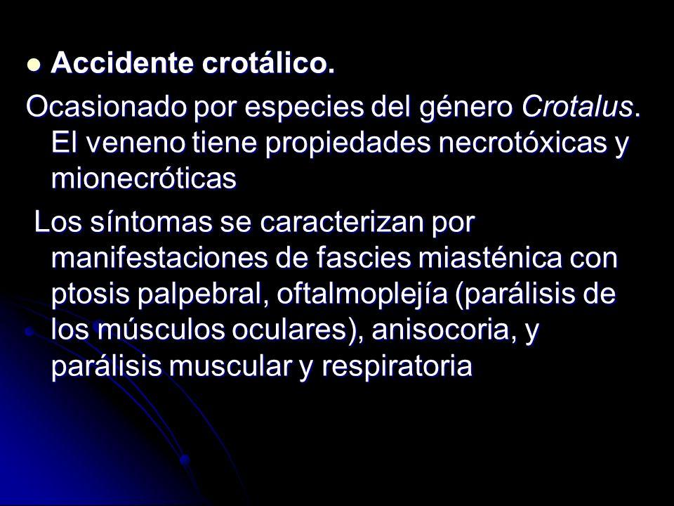Accidente crotálico. Ocasionado por especies del género Crotalus. El veneno tiene propiedades necrotóxicas y mionecróticas.