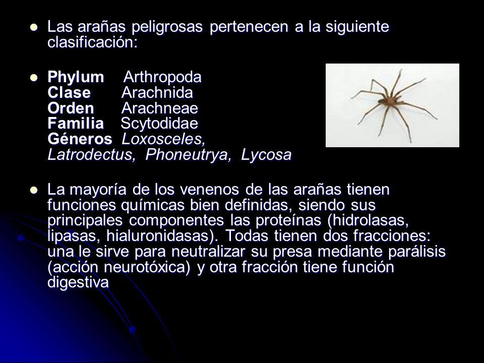Las arañas peligrosas pertenecen a la siguiente clasificación: