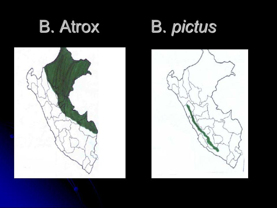 B. Atrox B. pictus