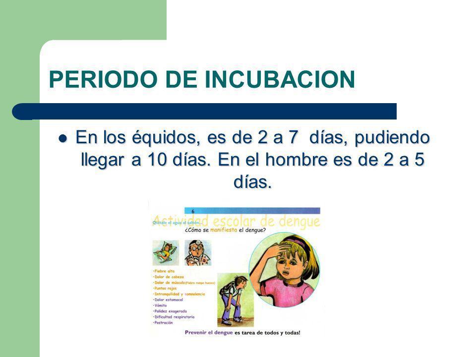 PERIODO DE INCUBACION En los équidos, es de 2 a 7 días, pudiendo llegar a 10 días.