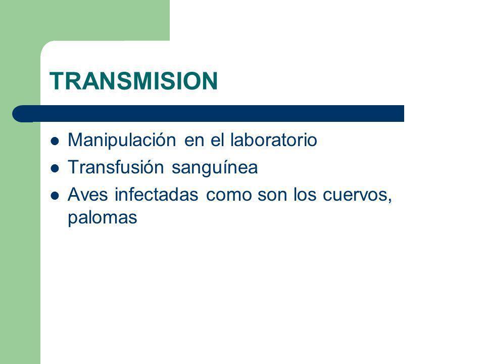 TRANSMISION Manipulación en el laboratorio Transfusión sanguínea