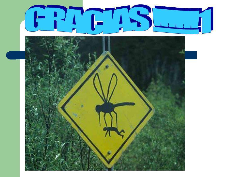 GRACIAS !!!!!!1