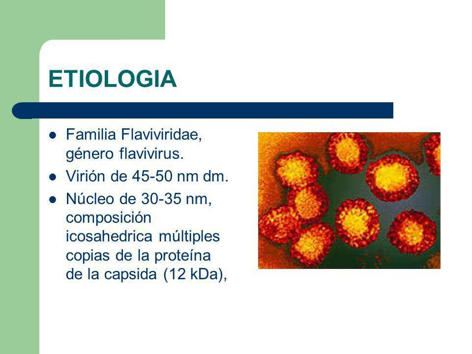 ETIOLOGIA Familia Flaviviridae, género flavivirus.