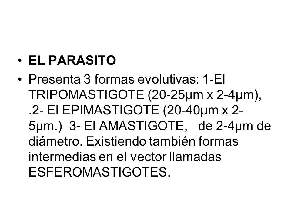 EL PARASITO