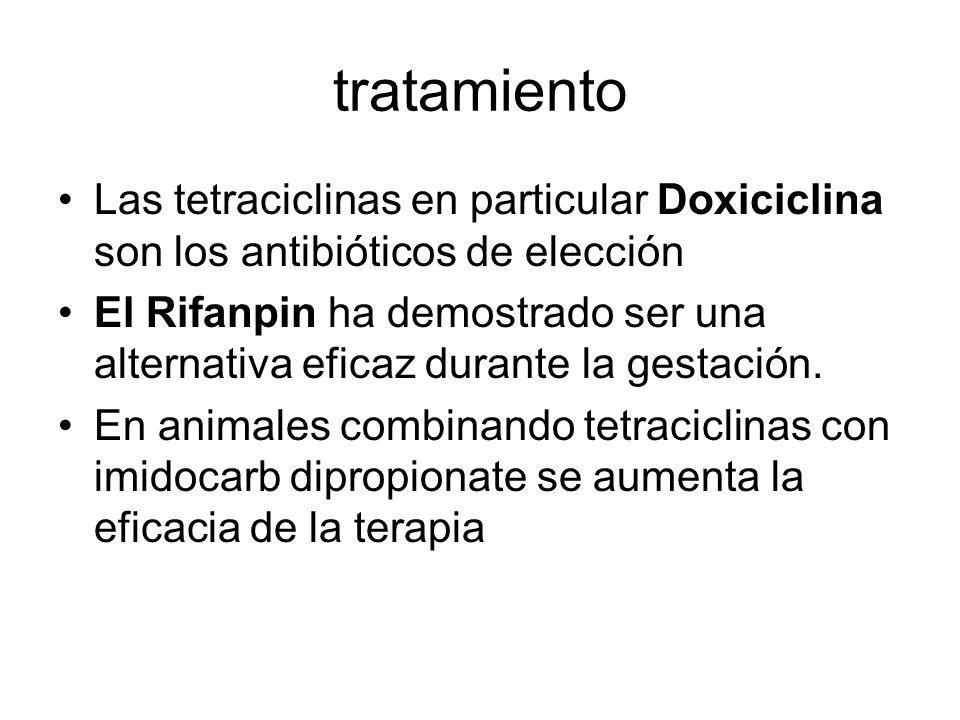 tratamiento Las tetraciclinas en particular Doxiciclina son los antibióticos de elección.