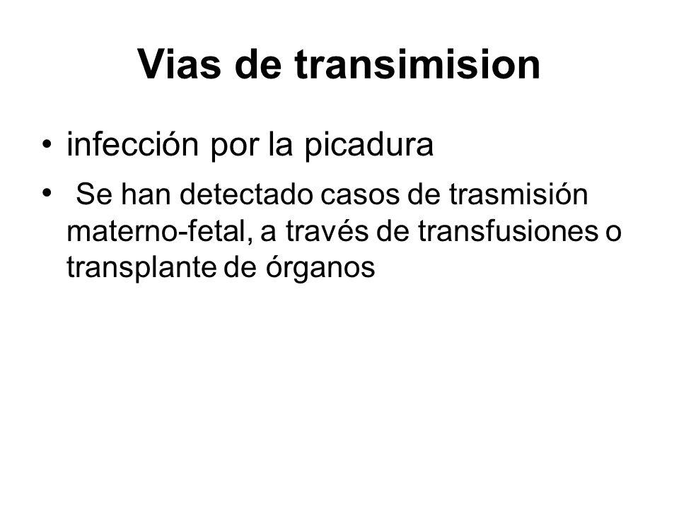 Vias de transimision infección por la picadura