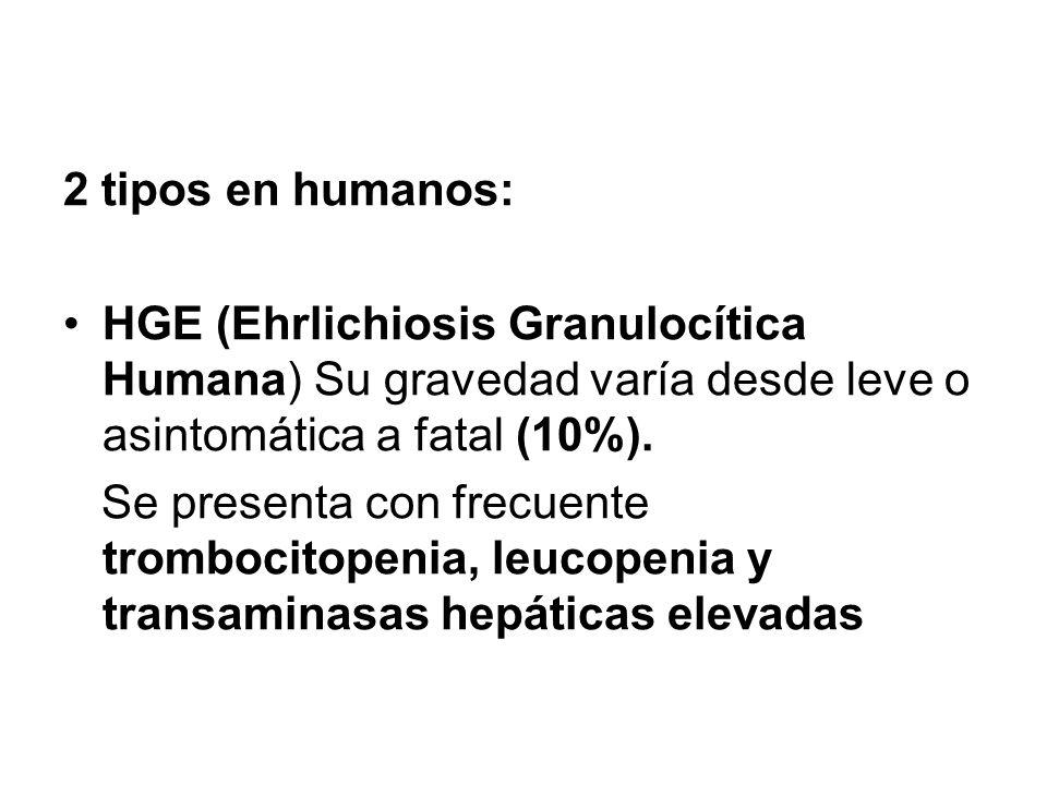 2 tipos en humanos: HGE (Ehrlichiosis Granulocítica Humana) Su gravedad varía desde leve o asintomática a fatal (10%).