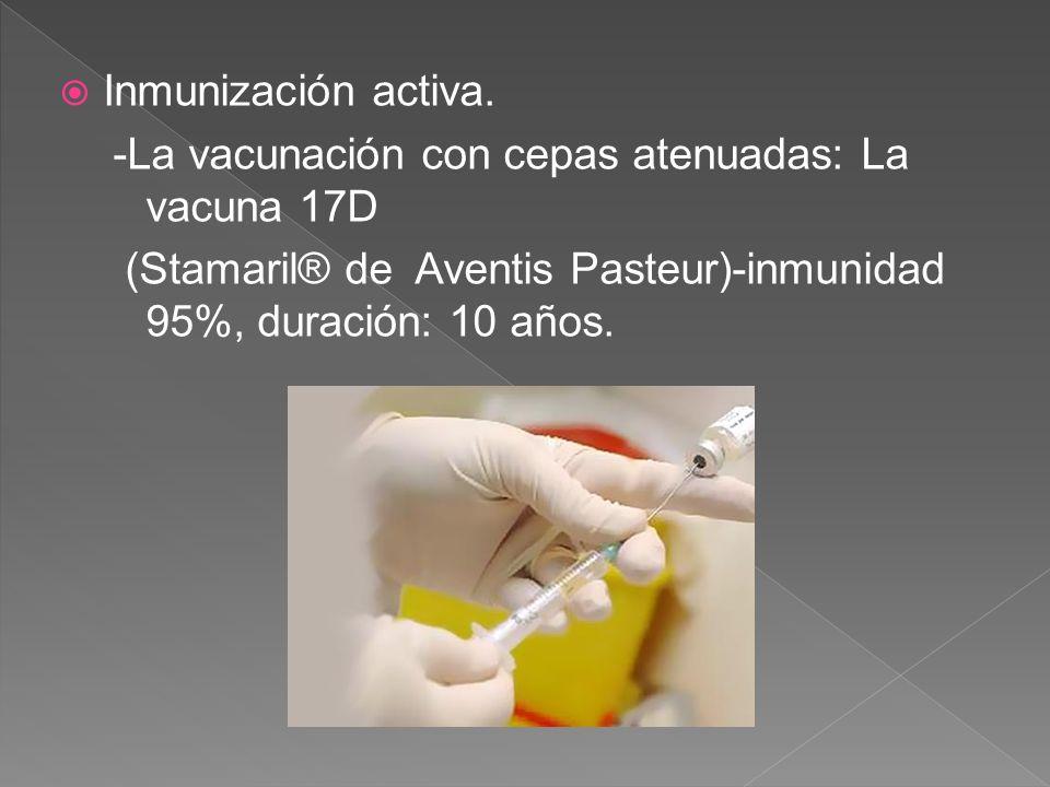 Inmunización activa. -La vacunación con cepas atenuadas: La vacuna 17D.
