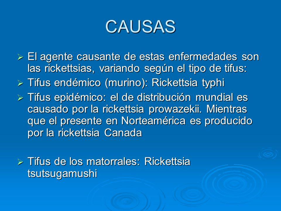 CAUSAS El agente causante de estas enfermedades son las rickettsias, variando según el tipo de tifus: