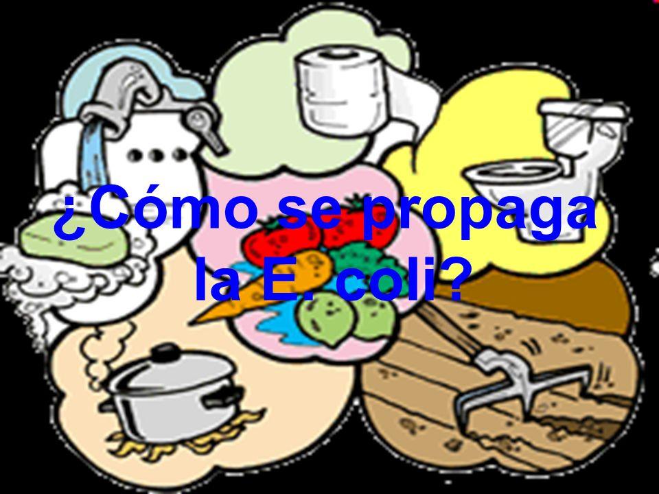 ¿Cómo se propaga la E. coli