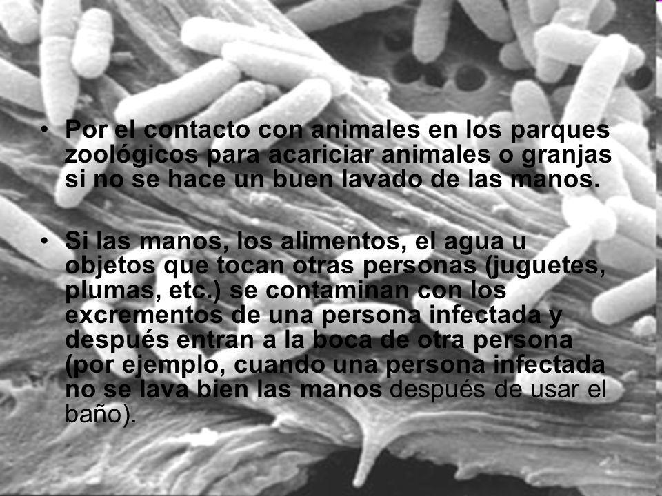 Por el contacto con animales en los parques zoológicos para acariciar animales o granjas si no se hace un buen lavado de las manos.