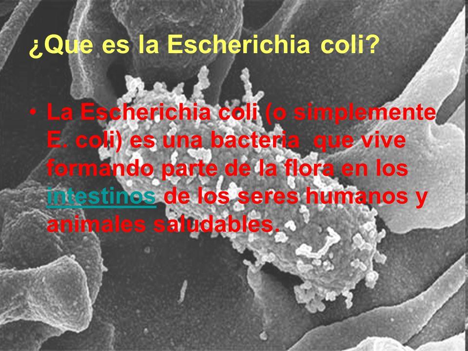¿Que es la Escherichia coli
