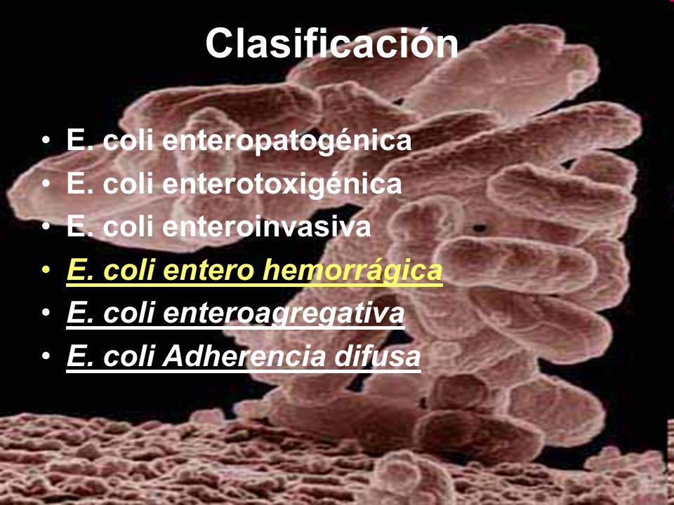 Clasificación E. coli enteropatogénica E. coli enterotoxigénica
