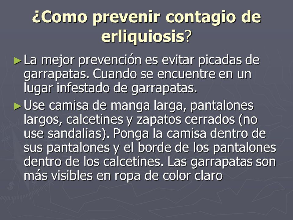¿Como prevenir contagio de erliquiosis