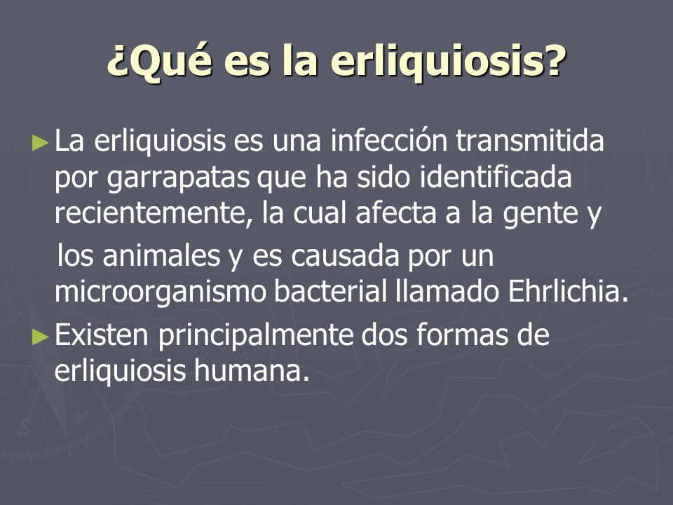 ¿Qué es la erliquiosis