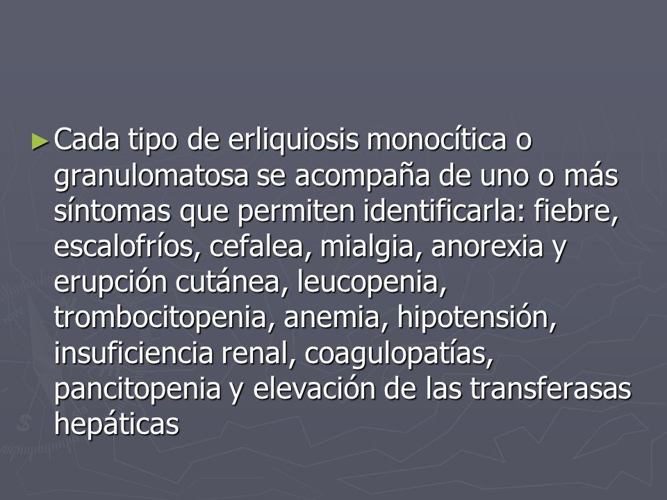 Cada tipo de erliquiosis monocítica o granulomatosa se acompaña de uno o más síntomas que permiten identificarla: fiebre, escalofríos, cefalea, mialgia, anorexia y erupción cutánea, leucopenia, trombocitopenia, anemia, hipotensión, insuficiencia renal, coagulopatías, pancitopenia y elevación de las transferasas hepáticas