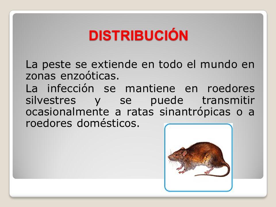 DISTRIBUCIÓNLa peste se extiende en todo el mundo en zonas enzoóticas.