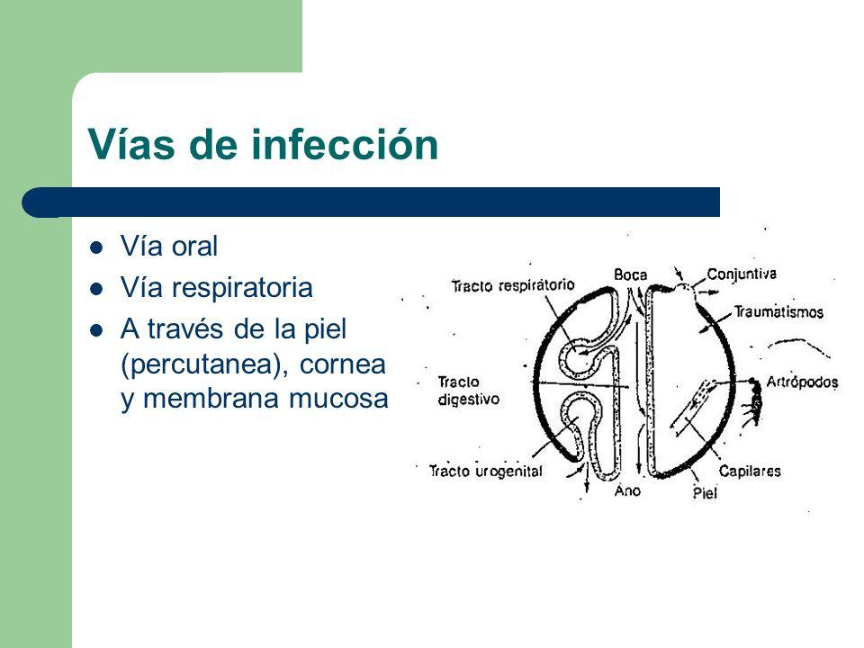 Vías de infección Vía oral Vía respiratoria