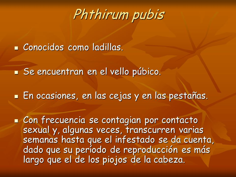 Phthirum pubis Conocidos como ladillas.