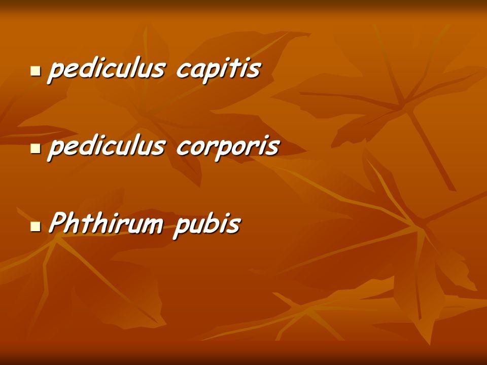 pediculus capitis pediculus corporis Phthirum pubis