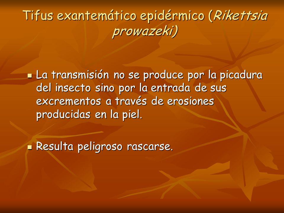 Tifus exantemático epidérmico (Rikettsia prowazeki)