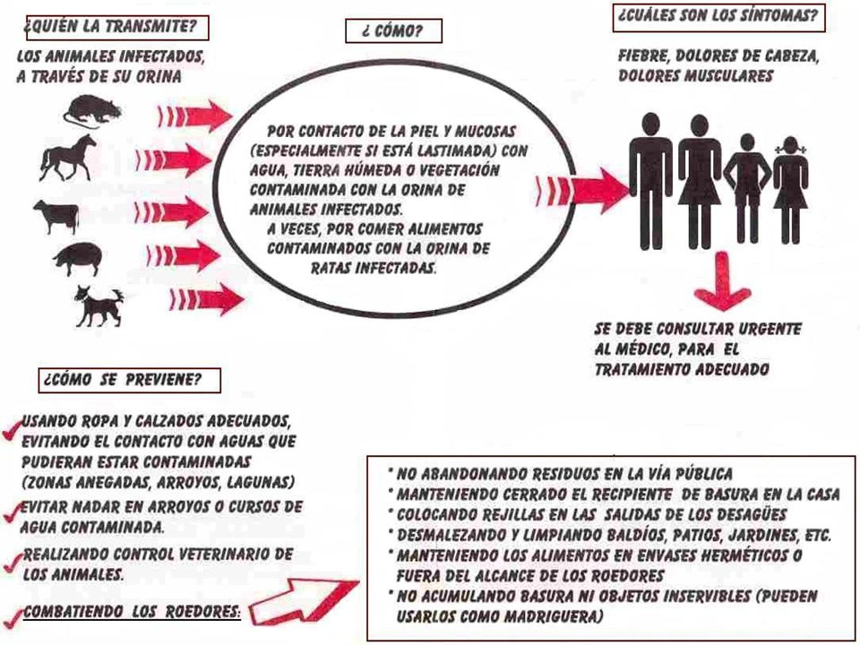 Prevención y Control Lucha contra el reservorio desratización,