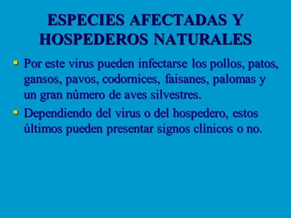 ESPECIES AFECTADAS Y HOSPEDEROS NATURALES