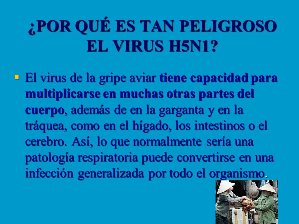 ¿POR QUÉ ES TAN PELIGROSO EL VIRUS H5N1