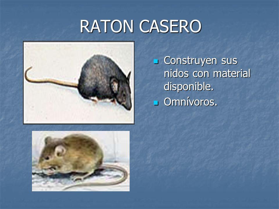 RATON CASERO Construyen sus nidos con material disponible. Omnívoros.