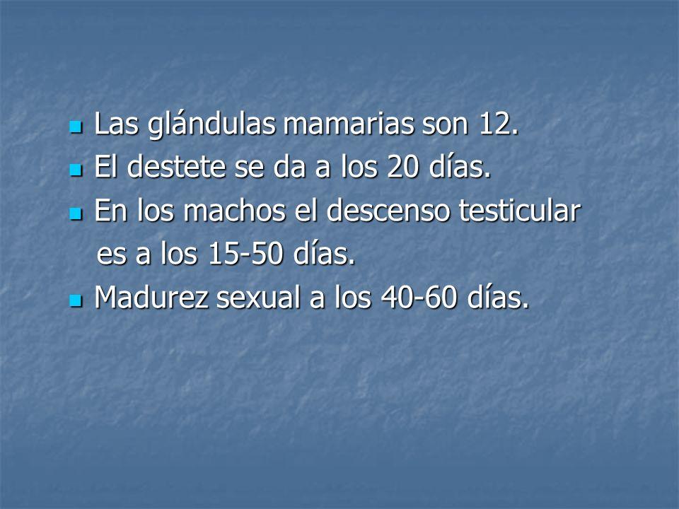 Las glándulas mamarias son 12.