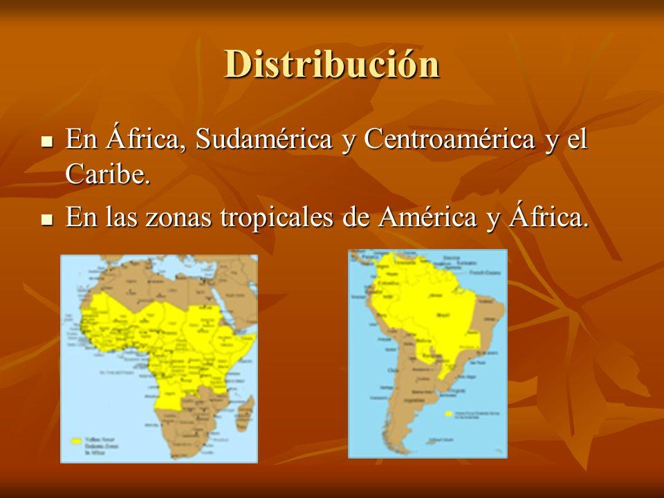 Distribución En África, Sudamérica y Centroamérica y el Caribe.