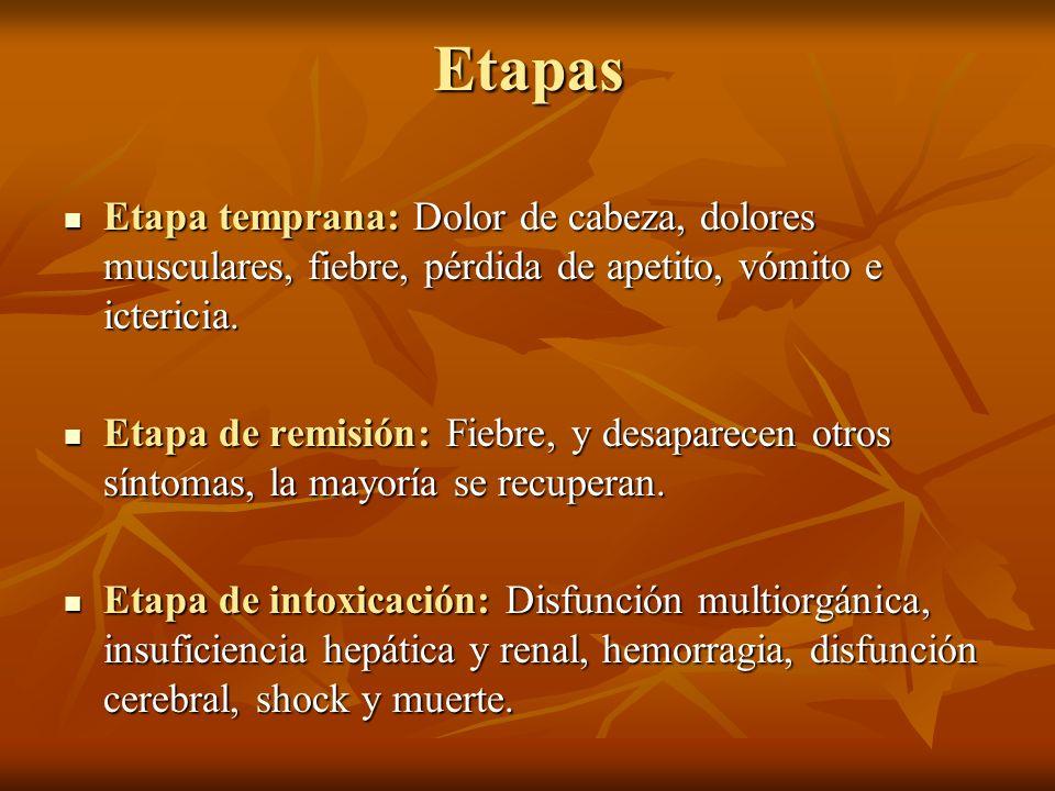 Etapas Etapa temprana: Dolor de cabeza, dolores musculares, fiebre, pérdida de apetito, vómito e ictericia.
