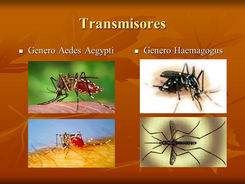 Transmisores Genero Aedes Aegypti Genero Haemagogus