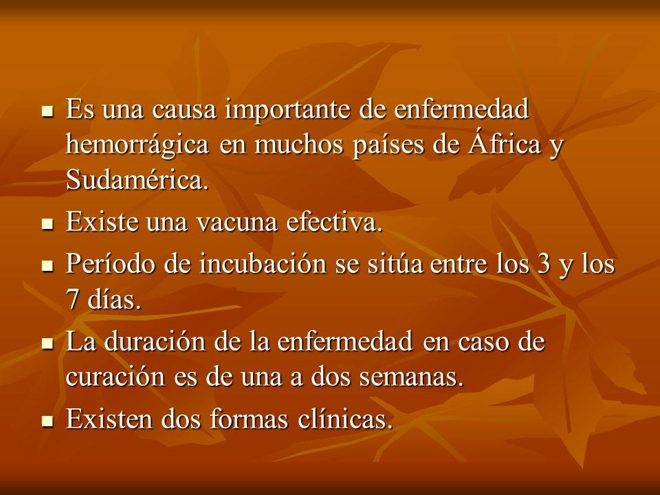 Es una causa importante de enfermedad hemorrágica en muchos países de África y Sudamérica.