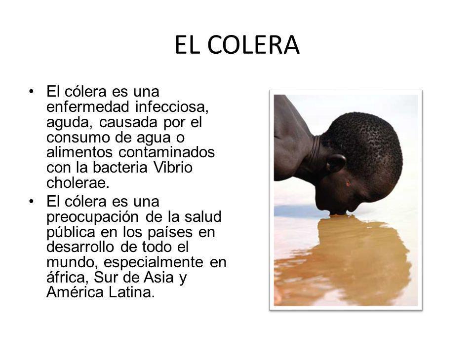 EL COLERA El cólera es una enfermedad infecciosa, aguda, causada por el consumo de agua o alimentos contaminados con la bacteria Vibrio cholerae.