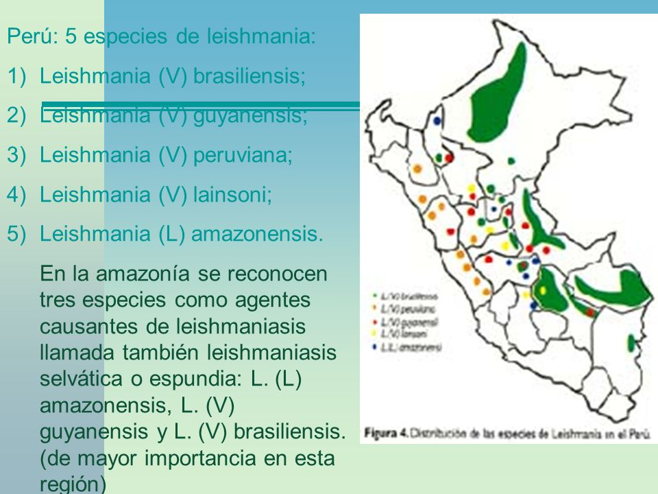 Perú: 5 especies de leishmania: